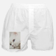 White long hair cat. Boxer Shorts