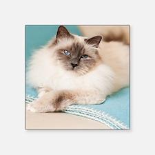 "White sacred birman cat wit Square Sticker 3"" x 3"""