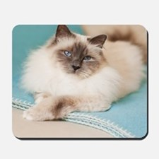 White sacred birman cat with blue eyes l Mousepad