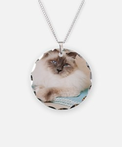 White sacred birman cat with Necklace