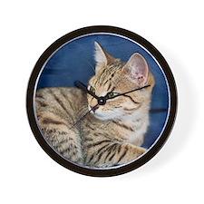 Tabby kitten looking behind her Wall Clock