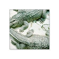 """Two alligators. Square Sticker 3"""" x 3"""""""