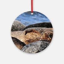 La Jolla Seals Round Ornament