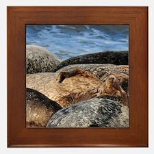 La Jolla Seals Framed Tile