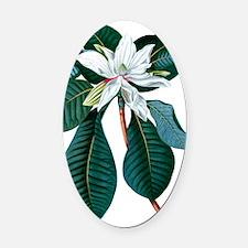 White Magnolia Oval Car Magnet