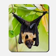 Fruit Bat Hanging In A Tree Mousepad