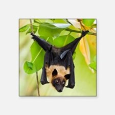 "Fruit Bat Hanging In A Tree Square Sticker 3"" x 3"""