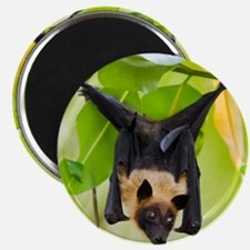 Fruit Bat Hanging In A Tree Magnet