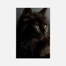 Little Black Cat Rectangle Magnet