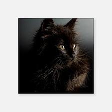 "Little Black Cat Square Sticker 3"" x 3"""