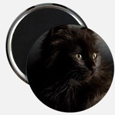 Little Black Cat Magnet