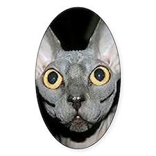 Sphynx Cat Decal