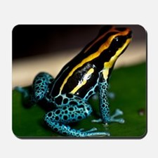 Poison Dart Frog Sitting On A Leaf Mousepad