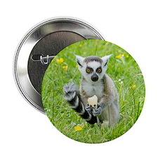 """Ring-tailed Lemur Eating Fruit 2.25"""" Button"""