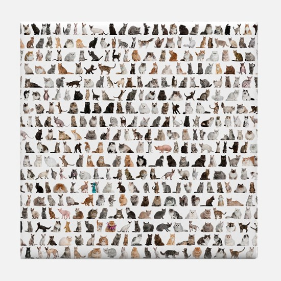 Large group of 471 cats breeds in fro Tile Coaster