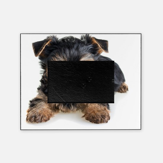 Yorkshire Terrier Puppy Picture Frame