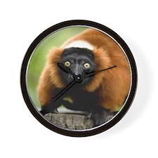 Red Ruffed Lemur Wall Clock