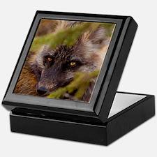Penetrating gaze of an alert red fox  Keepsake Box