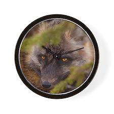 Penetrating gaze of an alert red fox ge Wall Clock