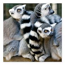 "Ring-Tailed Lemur Square Car Magnet 3"" x 3"""