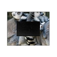 Ring-Tailed Lemur Picture Frame