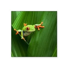 """Red eyed tree frog Square Sticker 3"""" x 3"""""""