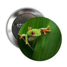 """Red eyed tree frog 2.25"""" Button"""