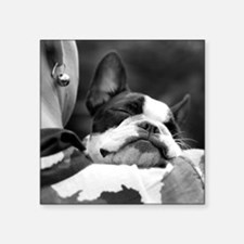 "Sleeping Boston terrier Square Sticker 3"" x 3"""