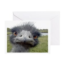 Peek-A-Boo Ostrich Greeting Cards (Pk of 10)