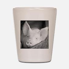 Pig Shot Glass
