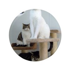"Cats on Pedestals 3.5"" Button"