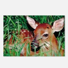 Deer Fawn Bambi Postcards (Package of 8)