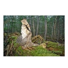 Drumming grouse Postcards (Package of 8)
