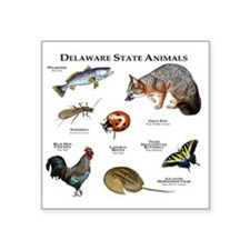 "Delaware State Animals Square Sticker 3"" x 3"""