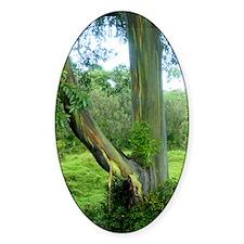 Tree2 Decal