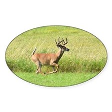 8 pt running Decal