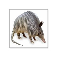 "armadillo Square Sticker 3"" x 3"""