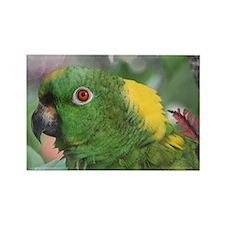 Yellow Nape Amazon Parrot Rectangle Magnet