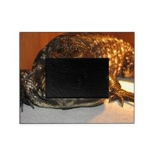 Rex the Tegu Picture Frame