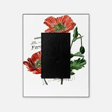 Poppies French  Vintage Art Picture Frame