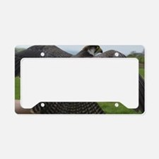 Peregrine Falcon License Plate Holder