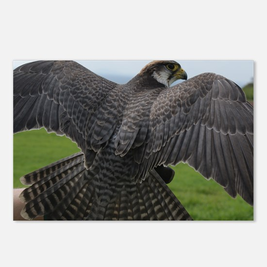 Peregrine Falcon Postcards (Package of 8)