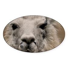 (13) Llama 8716 Decal