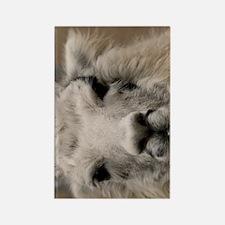 (12p) Llama 8716 Rectangle Magnet