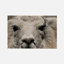 (20) Llama 8716 Rectangle Magnet