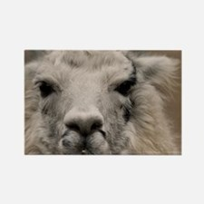 (3) Llama 8716 Rectangle Magnet