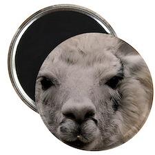 (4) Llama 8716 Magnet