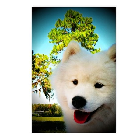 Chi Samoyed Postcards (Package of 8)