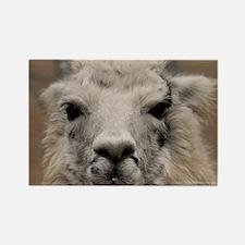 (2) Llama 8716 Rectangle Magnet