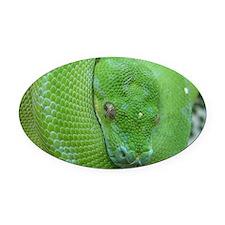 Tree python/chondro python Oval Car Magnet